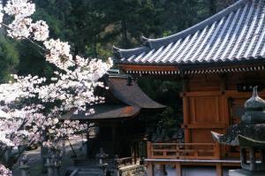 撮彩作品「春2008」、清水寺2