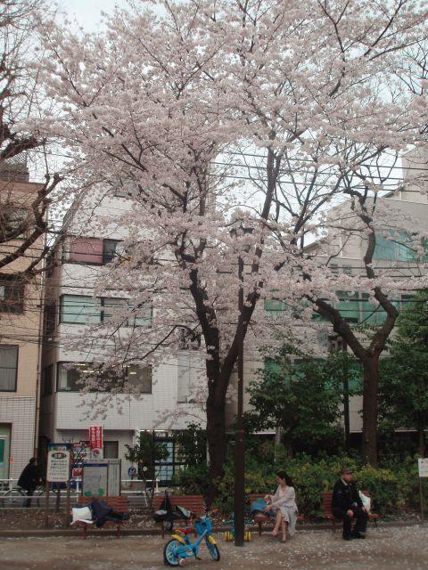 桜IN四ツ谷