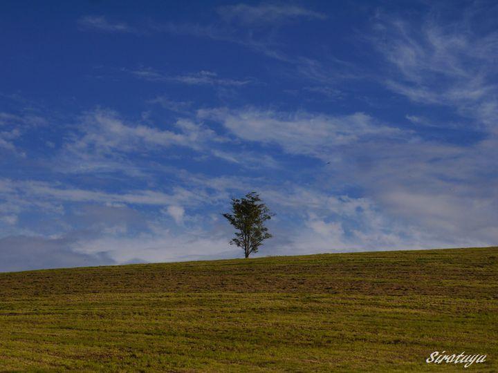 牧草畑の木