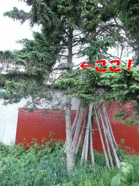 P1030748.jpg