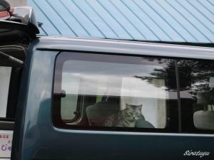 ちゃっかり車の中のマルオ