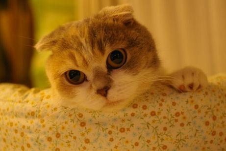 IMGP8358ー猫