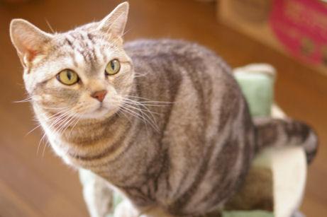 IMGP8419ー猫