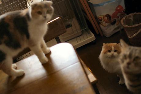 IMGP8421ー猫