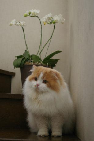 IMGP8454ー猫