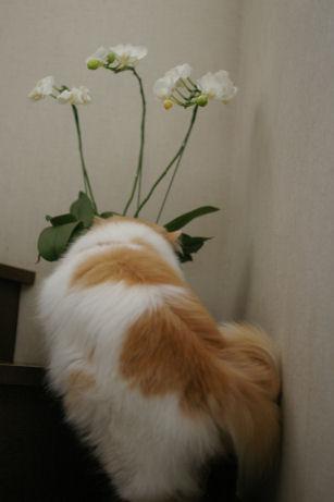 IMGP8456ー猫