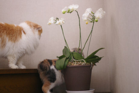 IMGP8459ー猫