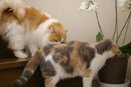 IMGP8461ー猫