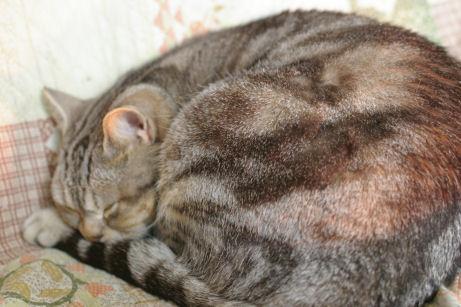 IMGP8479ー猫