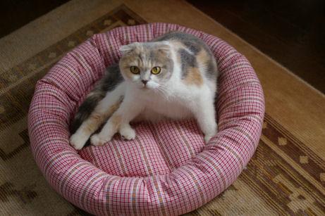 IMGP8509ー猫