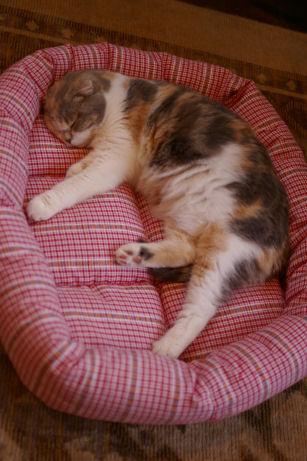IMGP8494ー猫