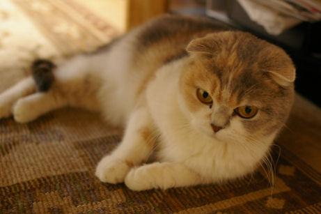 IMGP8511ー猫