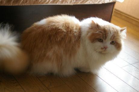IMGP8515-猫
