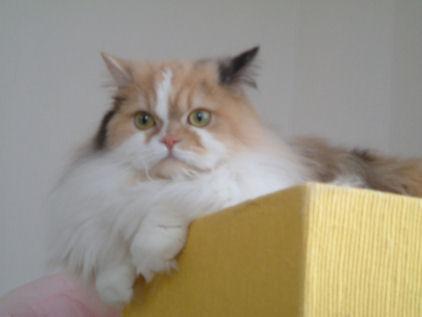 DSCF0394ー猫