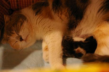 IMGP8707ー猫