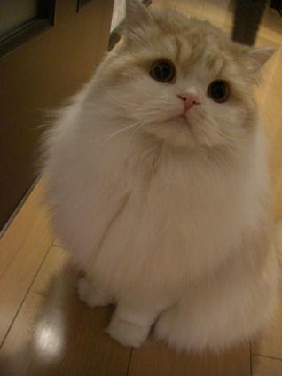 PICT0002ー猫