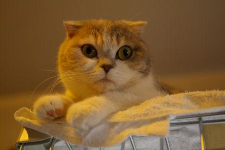 IMGP8907ー猫