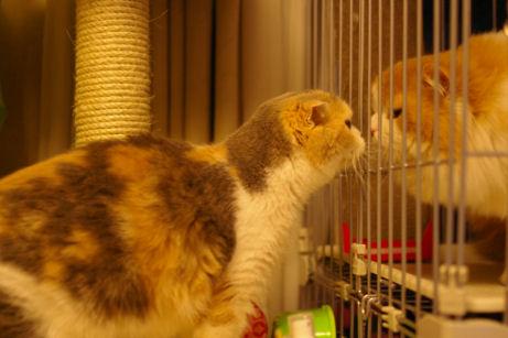 IMGP9018ー猫