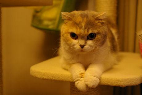 IMGP9020ー猫