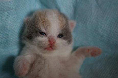 IMGP9175ー猫