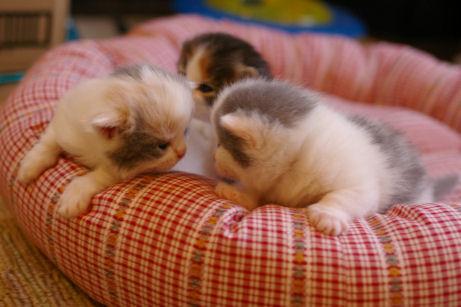 IMGP9223ー猫