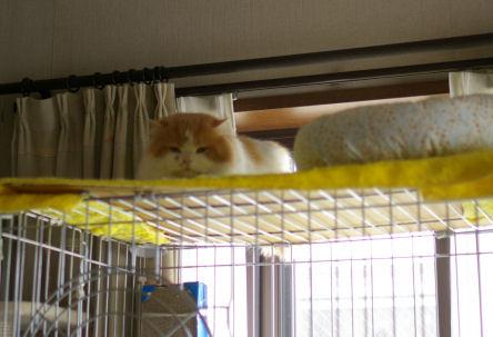 IMGP9374ー猫