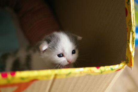 IMGP9431ー猫