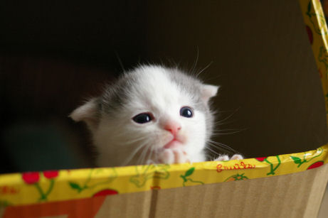 IMGP9432ー猫