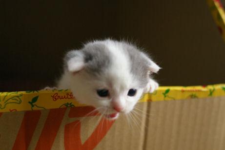 IMGP9434ー猫