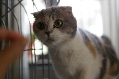 IMGP9585ー猫