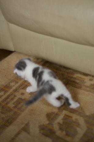 IMGP9623ー猫