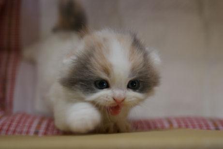 IMGP9821ー猫