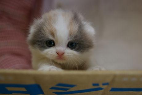 IMGP9823ー猫