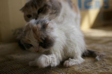 IMGP0057ー猫