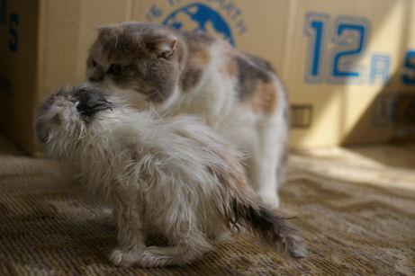 IMGP0065ー猫
