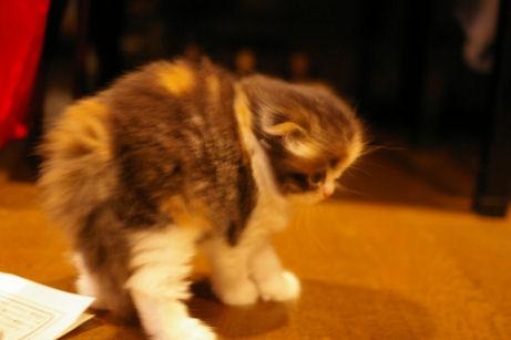 IMGP9906ー猫