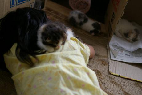 IMGP0084ー猫