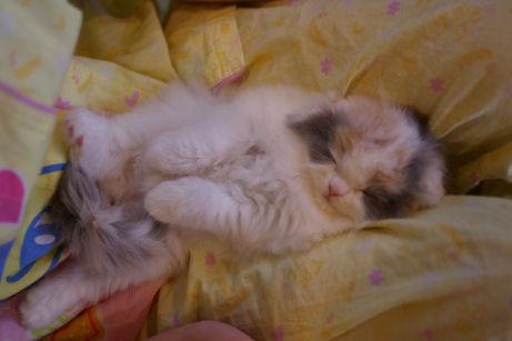 IMGP0104ー猫