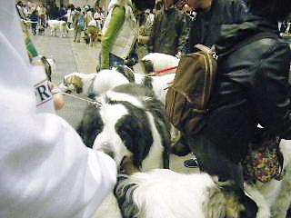 2008年03月30日_GRP_0027
