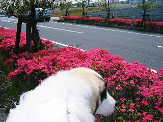 2008年04月30日_GRP_0004