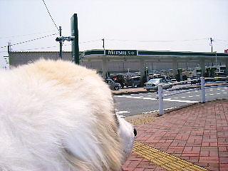 2008年04月30日_GRP_0002