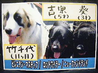 2008年05月20日_GRP_0000