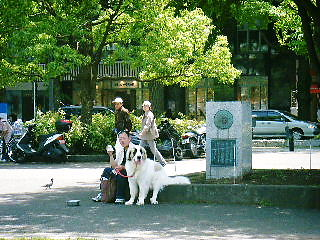 2008年06月01日_GRP_0011
