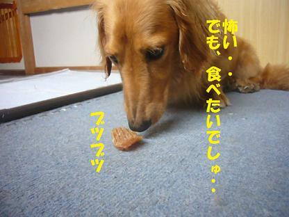 2008_0710_110343-P1140538.jpg