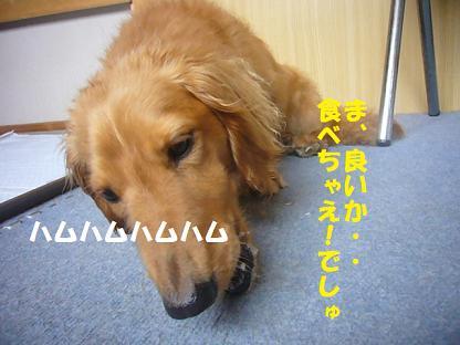 2008_0710_110347-P1140540.jpg