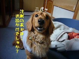 **お出かけ?**