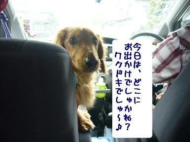どこへ行く?