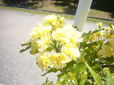 花(黄色)
