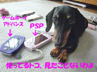 P1040670-2.jpg