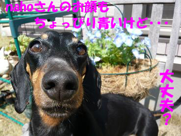 P1050435-2.jpg